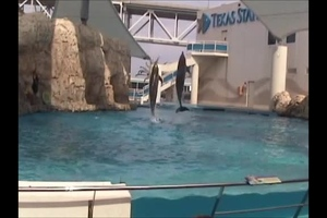 Video: Dolphin jumps