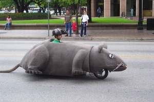 Rat Scooter