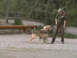 Video: Dog sled demonstration
