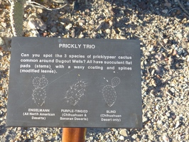 Three types of prickly pear