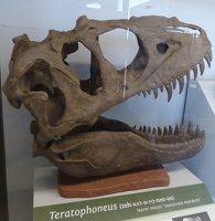 Teratophoneus at the Fossil Discovery Exhibit