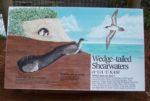Wedge-tailed Shearwater sign