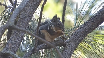 Video: Squirrel, nom-nom-nom