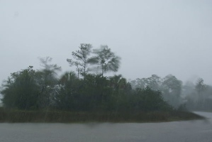 Rainy wildlife preserve